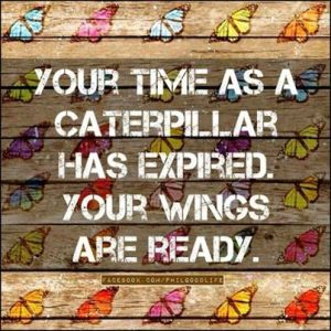 Your time as a caterpillar...